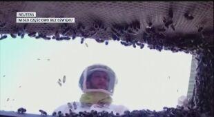Wytrenowano pszczoły, by rozpoznawały zakażenie SARS-COV-2
